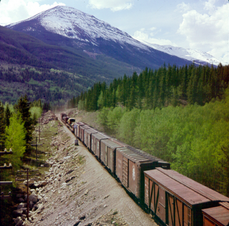 Image is a colour photograph showing a freight train moving through a wooded valley with a mountain in the distance.