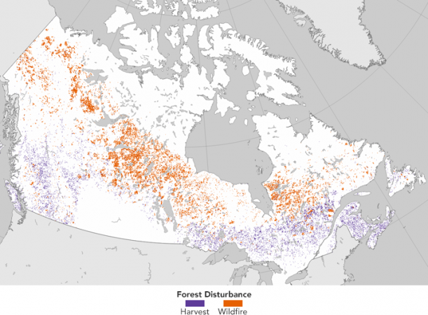 Complete Map Of Canada.A Complete Map Of Forest Disruption In Canada 1985 2011 The Channel