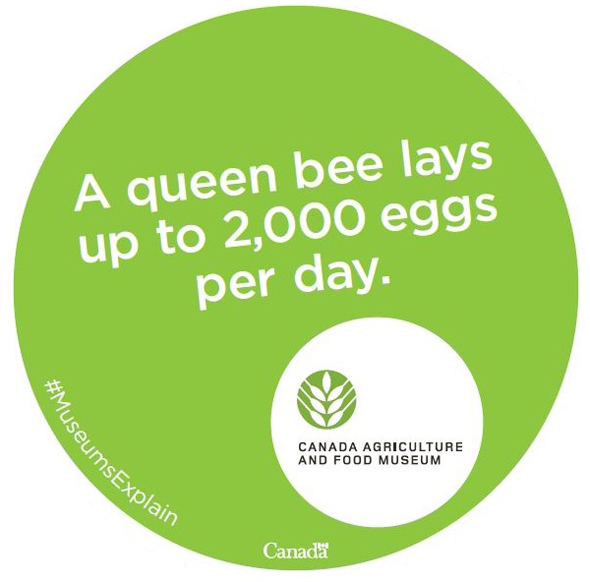 FACT: A queen bee lays up to 2000 eggs a day.
