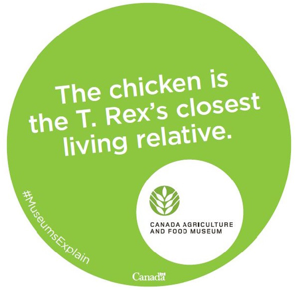 The chicken is the T. Rex's closest living relative.