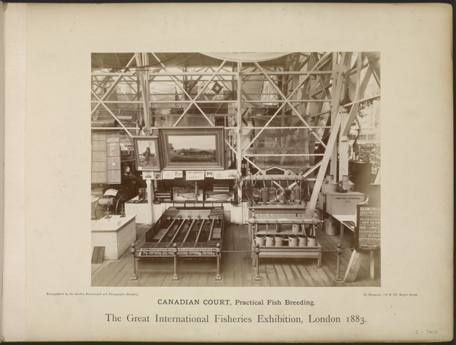Display of Canadian fish-culture technology by Samuel Wilmot at the London Fisheries Exhibition in 1883