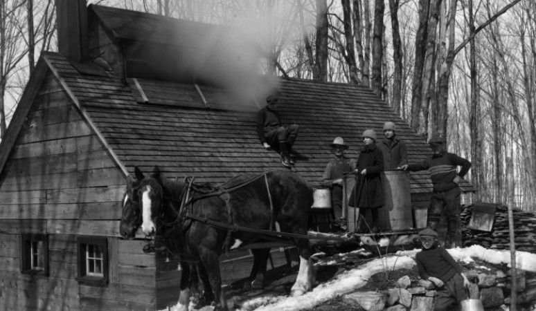 Collecting maple sap in Saint-Hilaire, Quebec, 1926. Source: Library and Archives Canada/e010860378