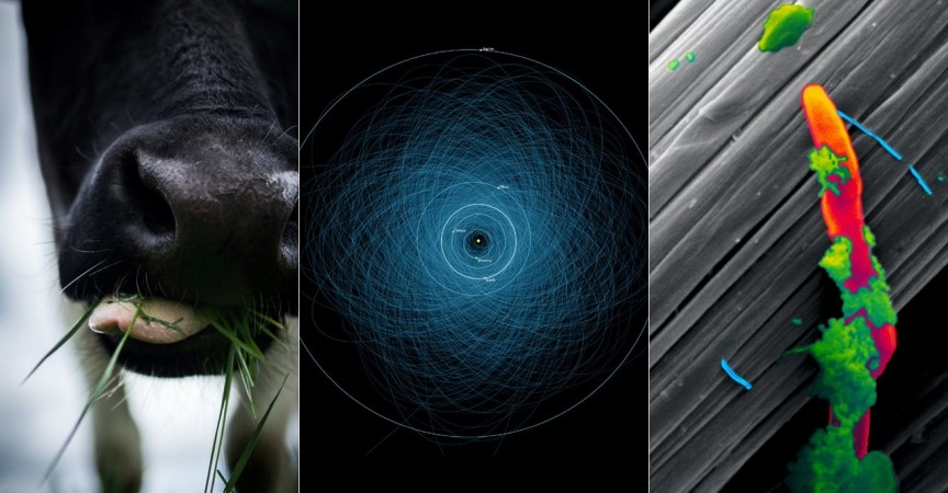 A close up of a cow nose, a diagram of orbits within our solar system, and an electron microscope image of a bacteria