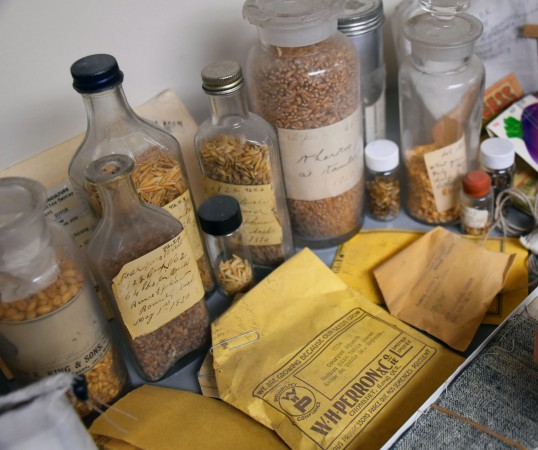 A close-up photo of a grouping of glass bottles with handwritten labels, and filled with grain seeds. Small, printed yellow paper envelopes are laid out in front of the bottles.