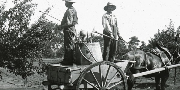 historical black and white image of two men spraying apple trees for pests