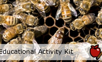 Busy Bees Educational Activity Kit