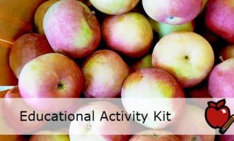 Apples Activity Kit