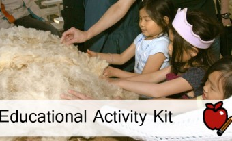 From Sheep to Sweater Educational Activity Kit