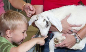 Meet the Farm Animals School Program