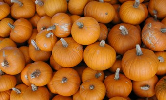 Pumpkins School Program