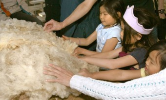 AgVenture: From Sheep to Sweater School Program