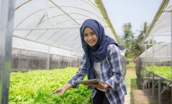 A young female farmer on a hydroponic farm inspecting a lettuce crop.