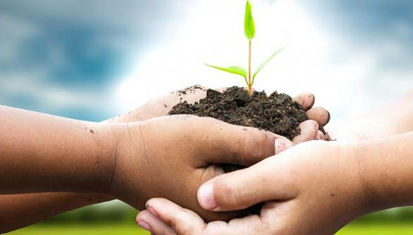 Hands holding soil with a small growing plant