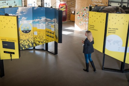 Canola : l'histoire d'une innovation canadienne