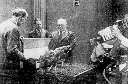 "The chicken feeder presented during a 1948 episode of the British Broadcasting Corporation television show The Inventors' Club. Anon., ""Sciences et voyages – La télévision permet aux inventeurs anglais de faire connaître leurs inventions au grand public."" Photo-Journal, 7 October 1948, 8."