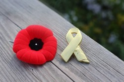 Two Remembrance Day pins sit side-by-side on a wooden surface: A red poppy pin sits next to a gold ribbon-shaped pin that features an emblem of a pigeon.